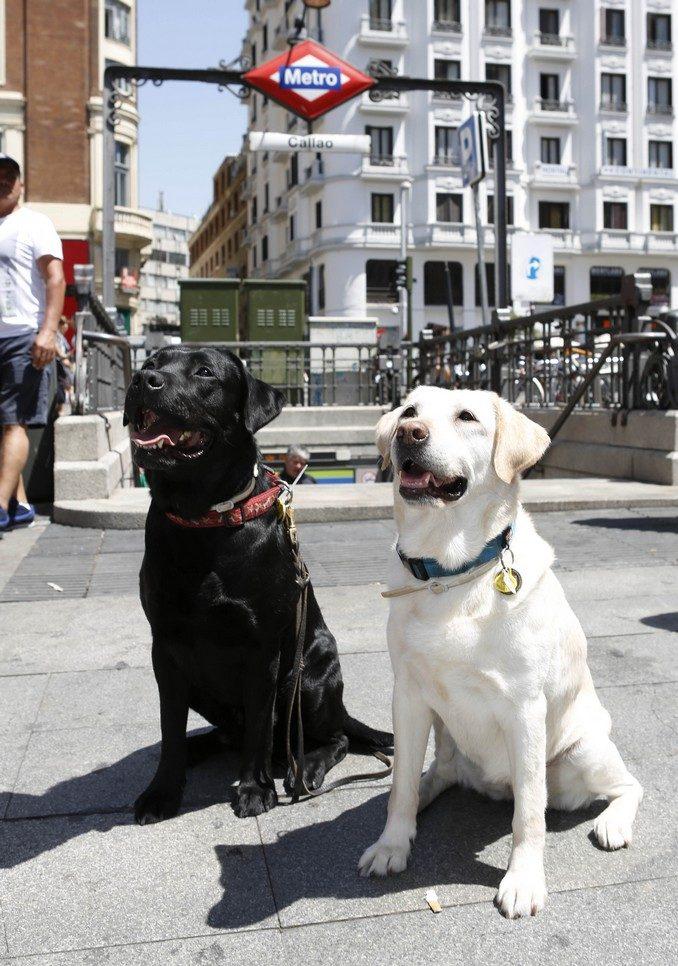 perros en metro_